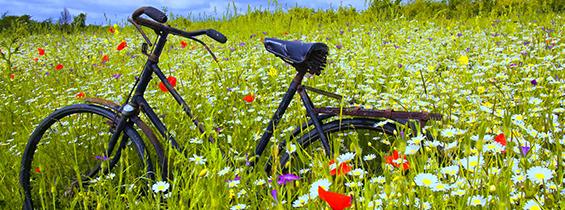 cykelforsikring