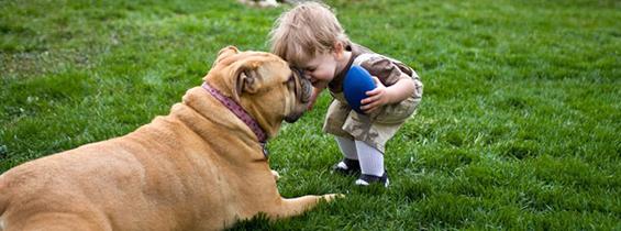 hundeforsikring